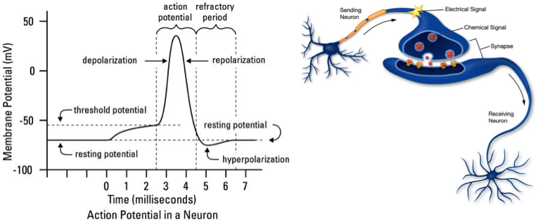 Artificial neural networks the rosenblatt perceptron blog inspired by the biological principles of a neuron franck rosenblatt developed the concept of the perceptron at cornell aeronautical laboratory in 1957 ccuart Choice Image